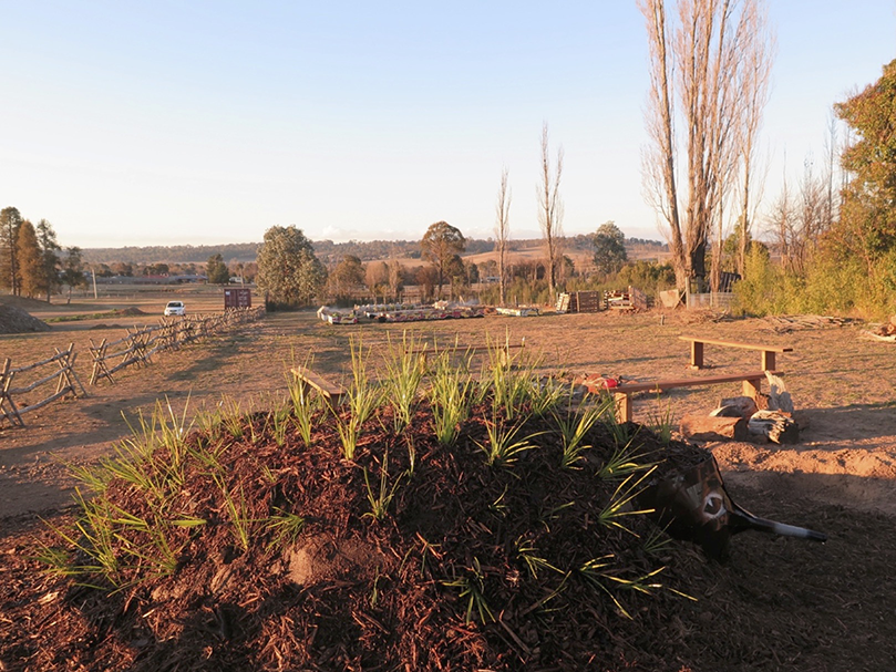 View of In the Shadow of a Willow Tree: A Community Garden